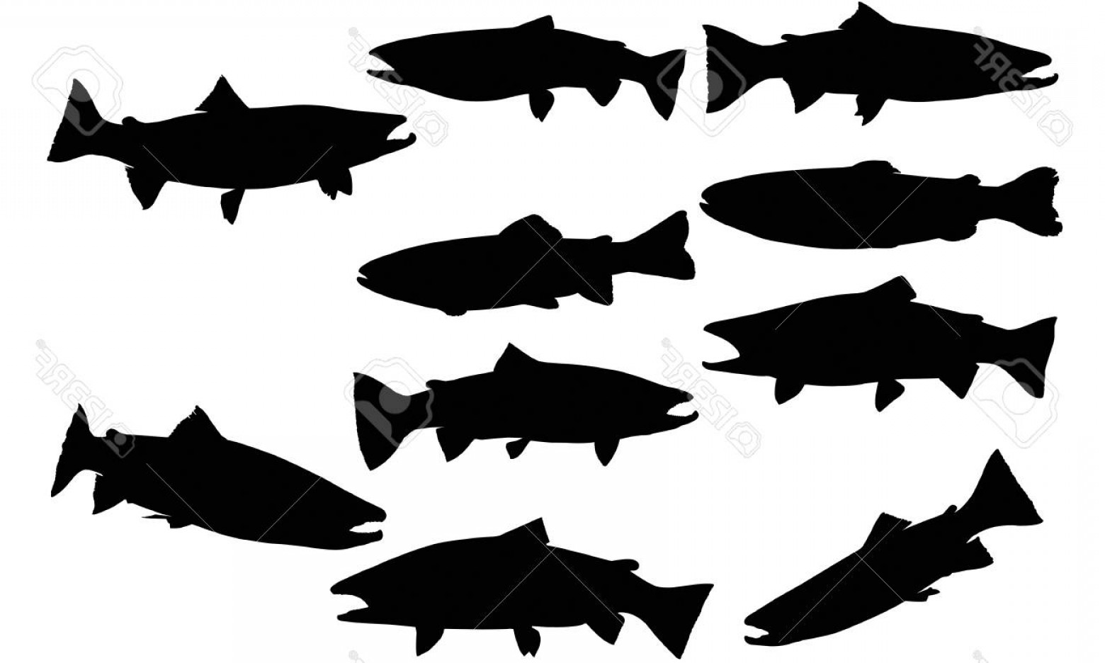 Speckled Trout Vector: Photostock Vector Steelhead Trout Silhouette Illustration