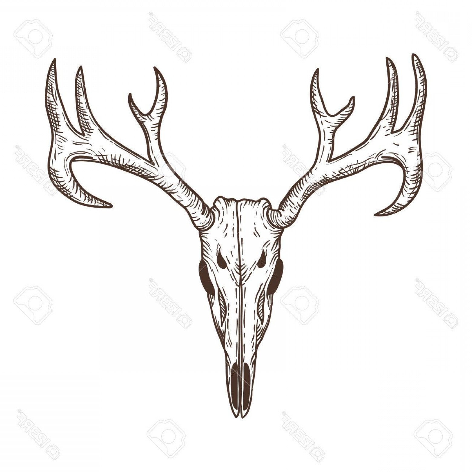 Vector Buck Print: Photostock Vector Stylized Deer Skull Sketch Hand Drawn Original Illustration Design For Clothing Print Postcards Card