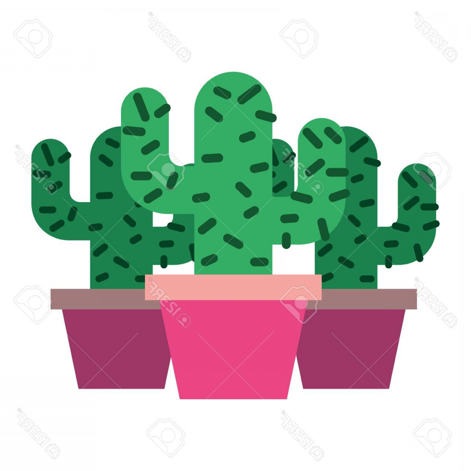 Potted Cactus Plant Vector: Photostock Vector Three Potted Cactus Plant Natural Vector Illustration