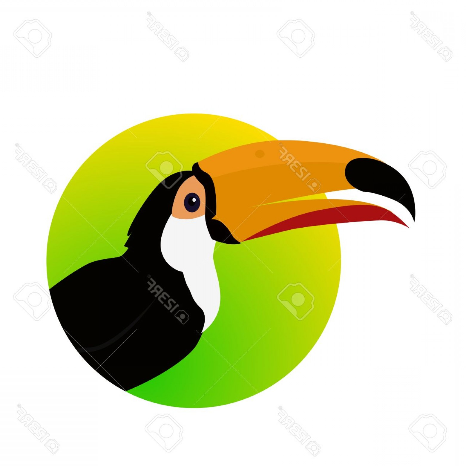 Toucan Vector: Photostock Vector Toucan Vector Animals Of Rainy Amazonian Forests In Flat Design Fauna Of South America Wild Life In