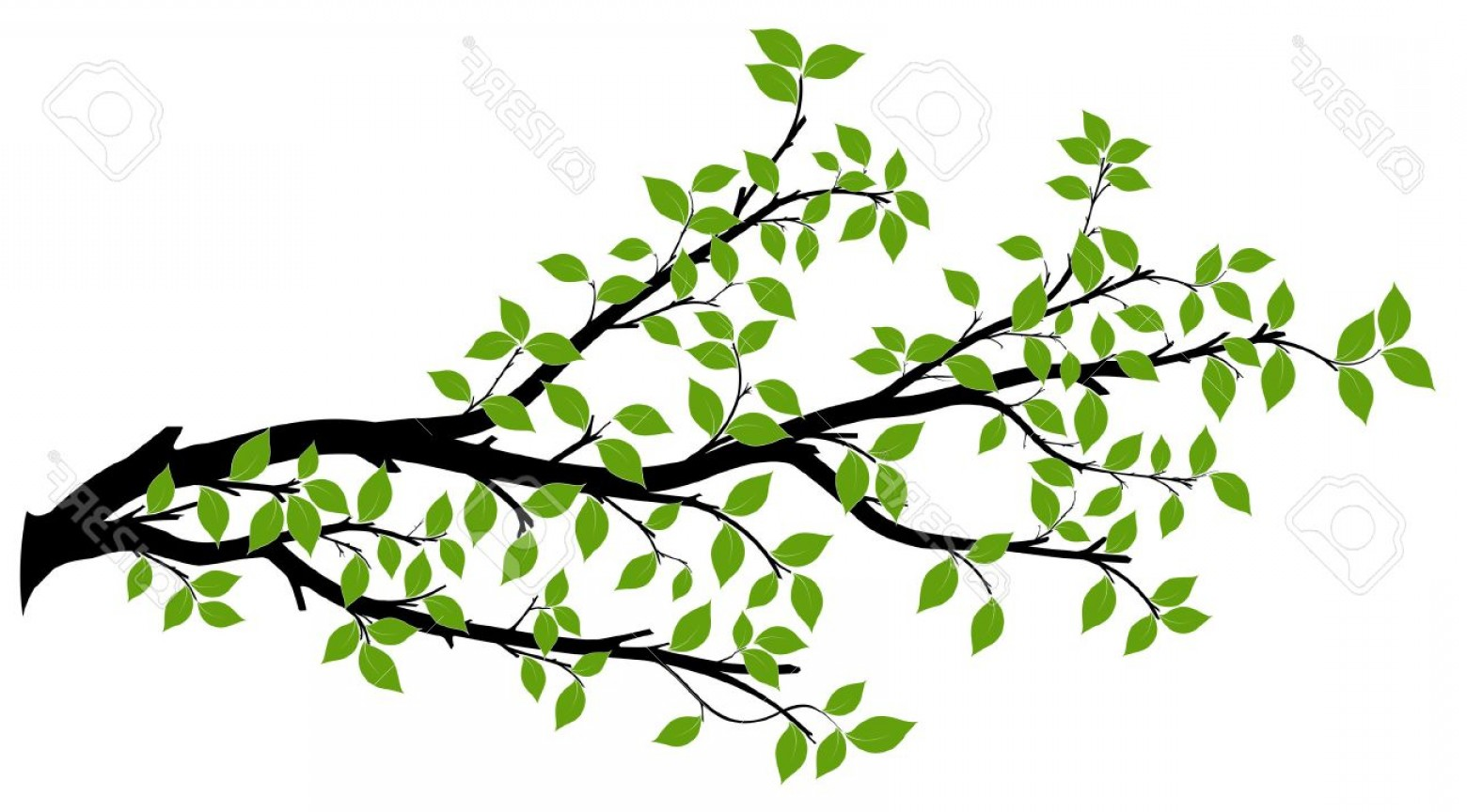 Tree Branch Vector Background: Photostock Vector Tree Branch With Green Leaves Over White Background Vector Graphics Artwork Design Element