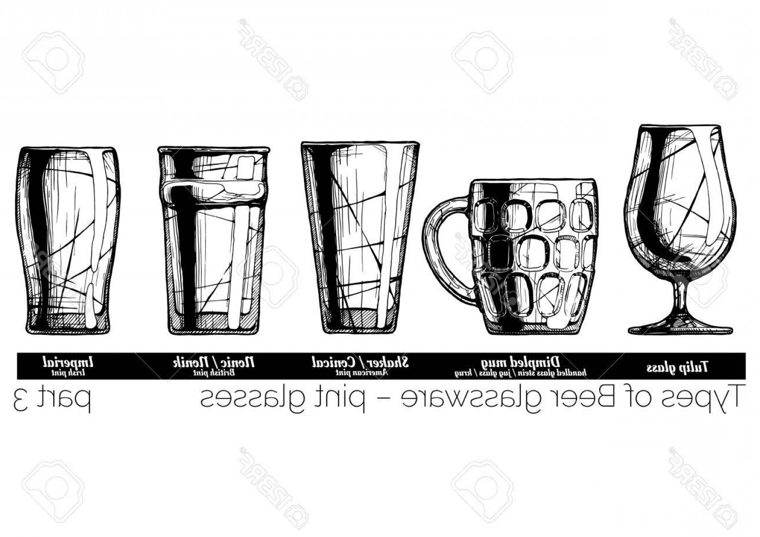 Beer Chalice Vector Logo: Photostock Vector Types Of Beer Glassware Pint Glasses Tulip Dimpled Conical Nonic And Imperial Pints Illustration Of