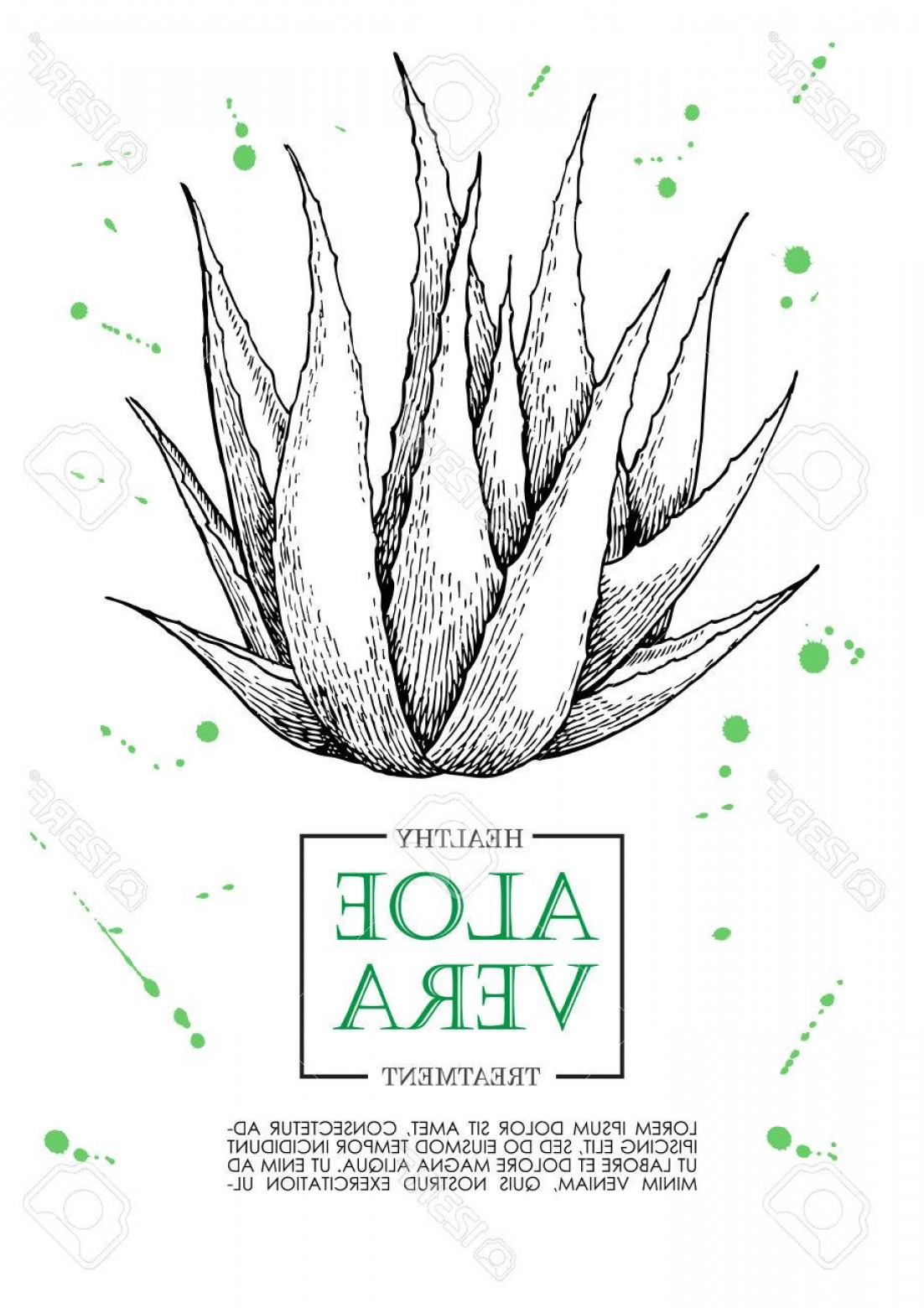 Aloe Vector Graphics: Photostock Vector Vector Aloe Vera Hand Drawn Illustrations Detailed Drawing Aloe Vera Banner Poster Label Brochure Te