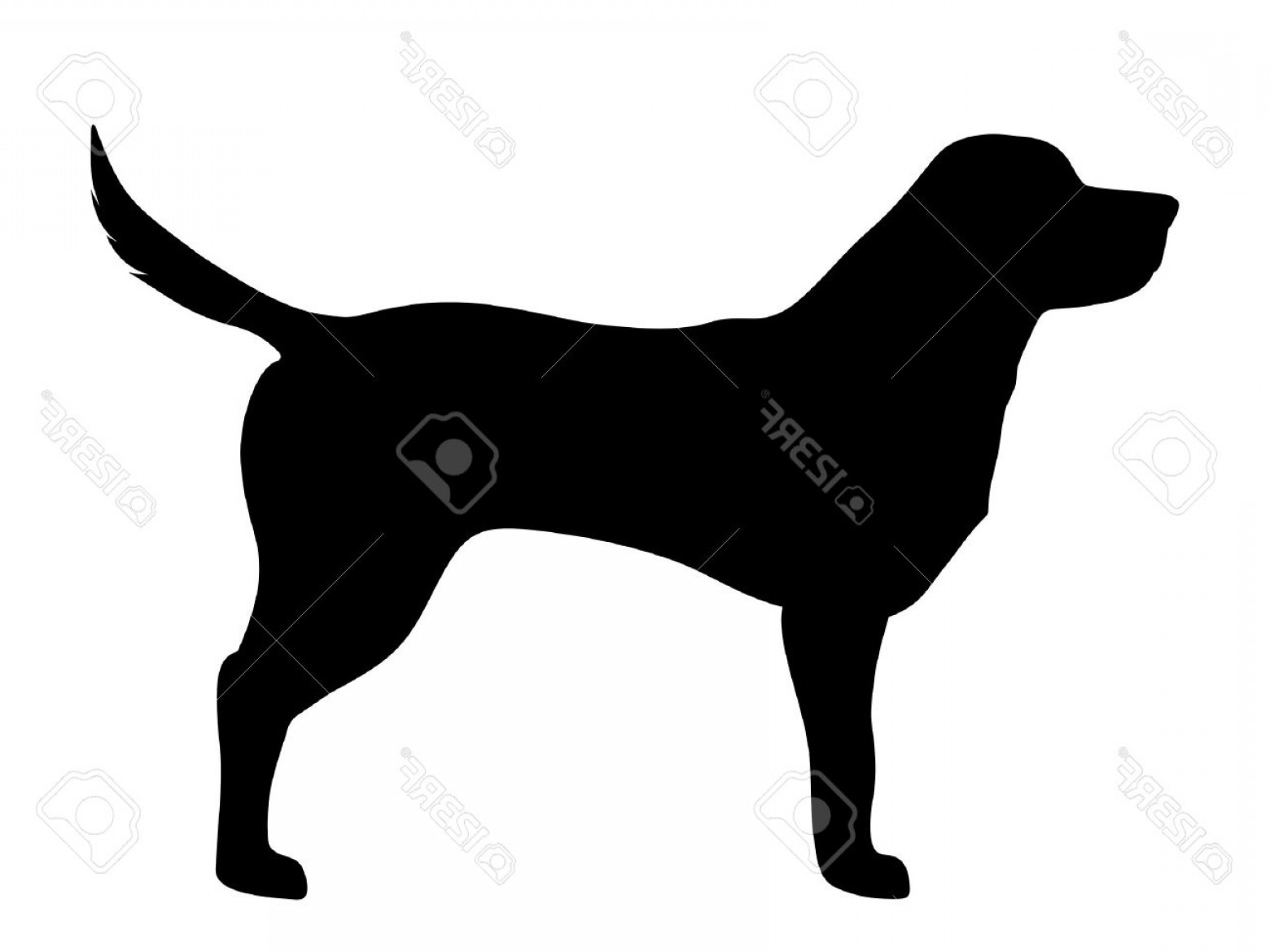 Labrador Silhouette Vector: Photostock Vector Vector Black Silhouette Of A Labrador Retriever Dog Isolated On A White Background