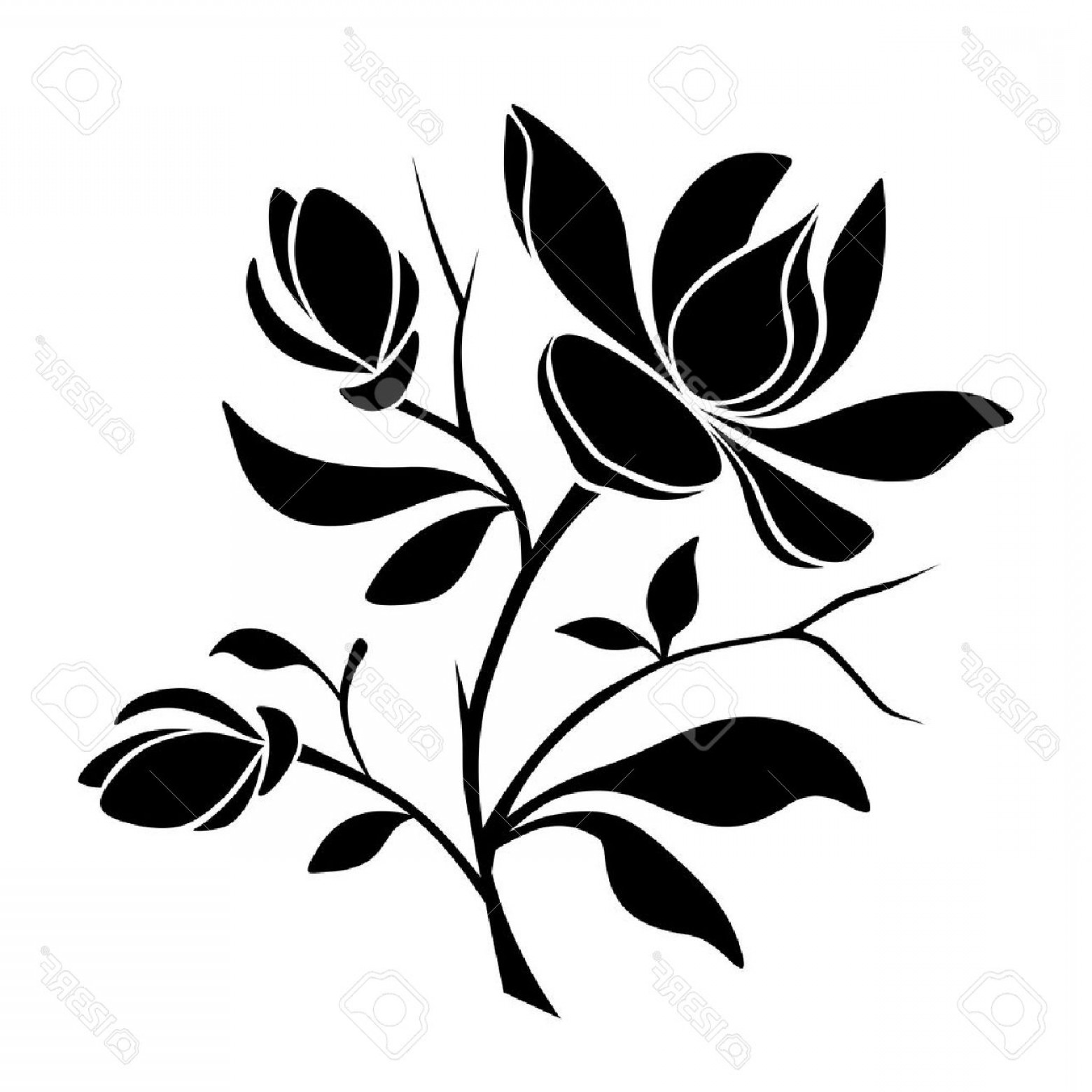 Magnolia Black And White Vector: Photostock Vector Vector Black Silhouette Of Magnolia Flowers On A White Background