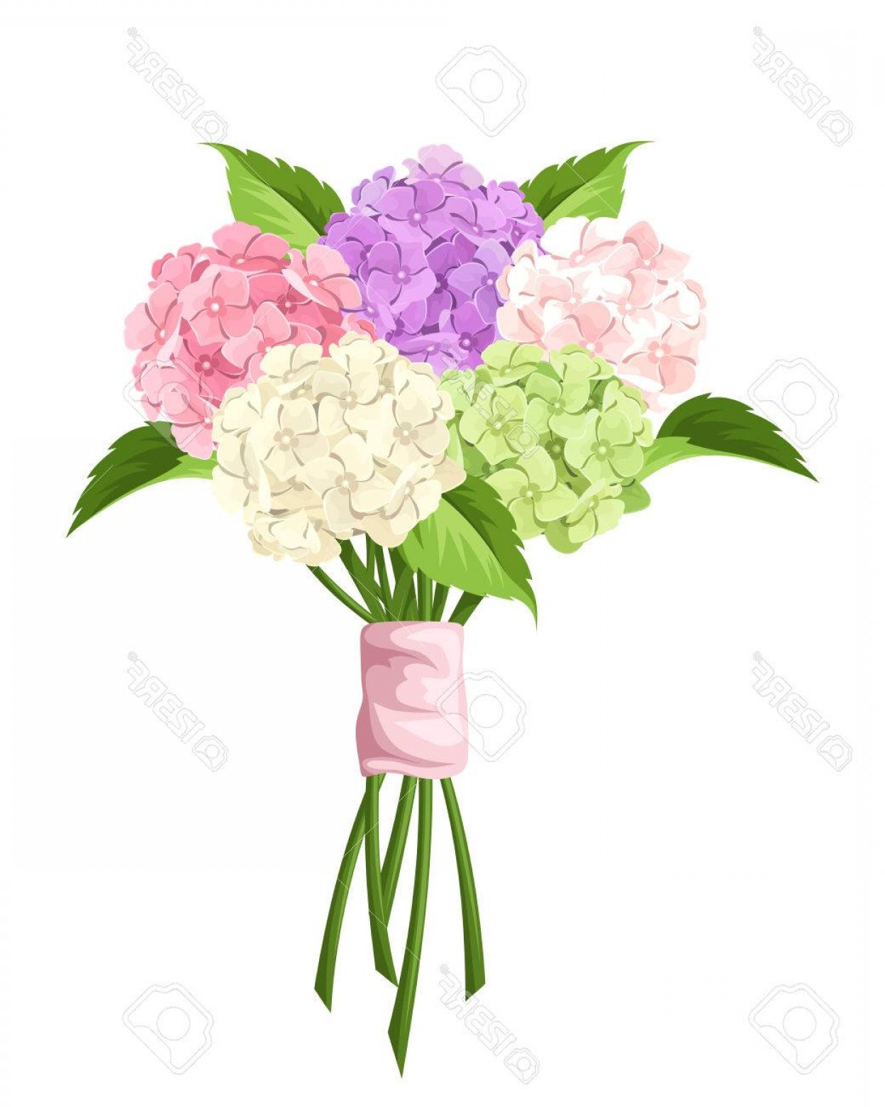 Purple Green And White Vector: Photostock Vector Vector Bouquet Of Pink Purple Green And White Hydrangea Flowers Isolated On A White Background