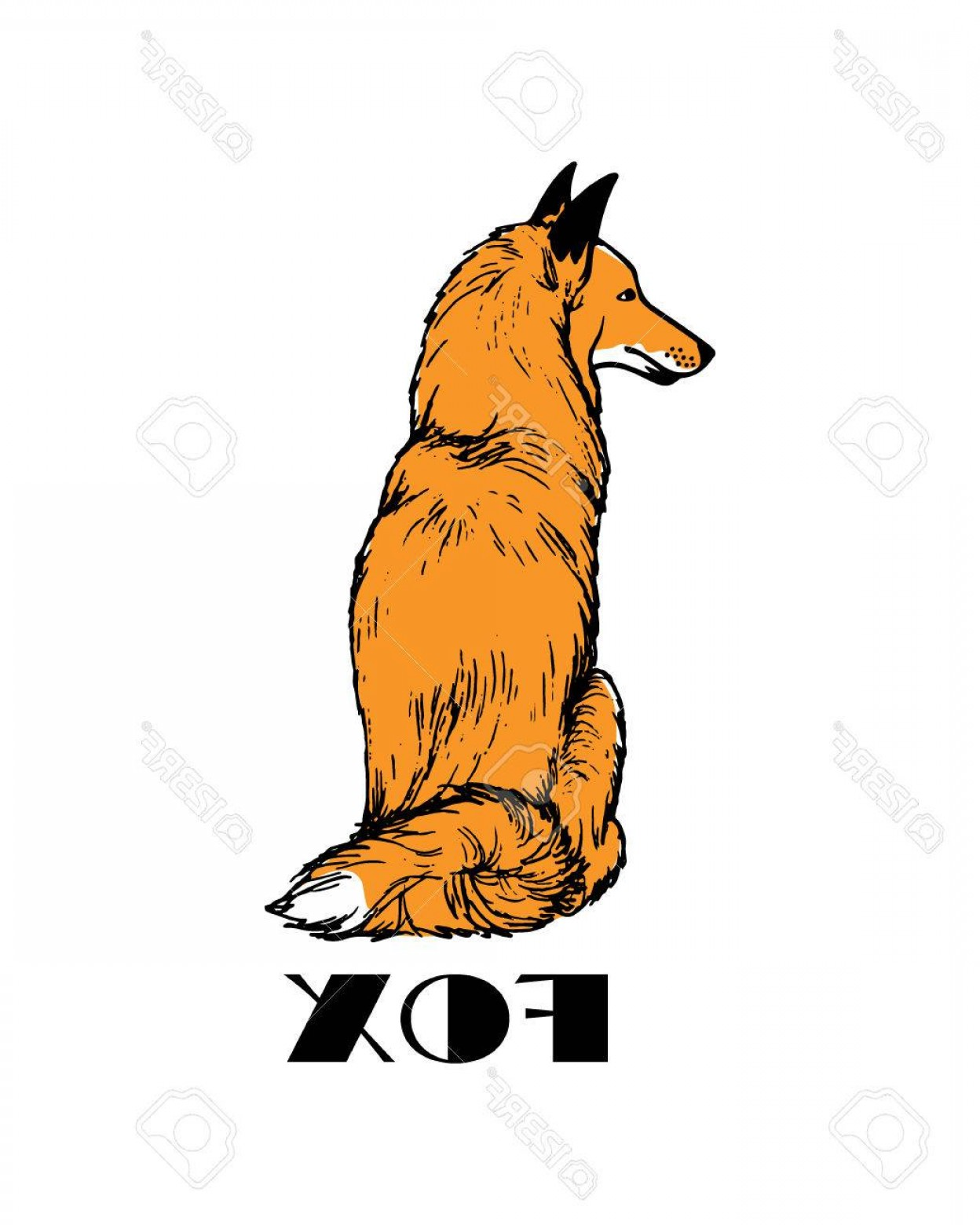 Sitting Fox Logo Vector: Photostock Vector Vector Card With Hand Drawn Sitting Fox Made With Pen And Ink Back View Realistic Animal Illustratio