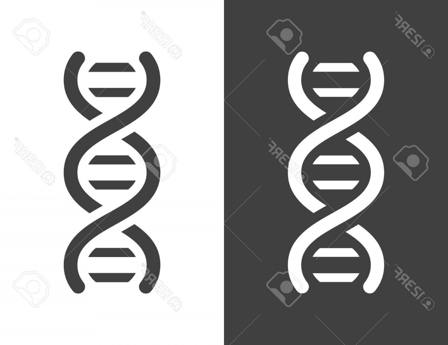 DNA Helix Vector: Photostock Vector Vector Dark Grey Dna Helix Icon With A Simple Modern Look