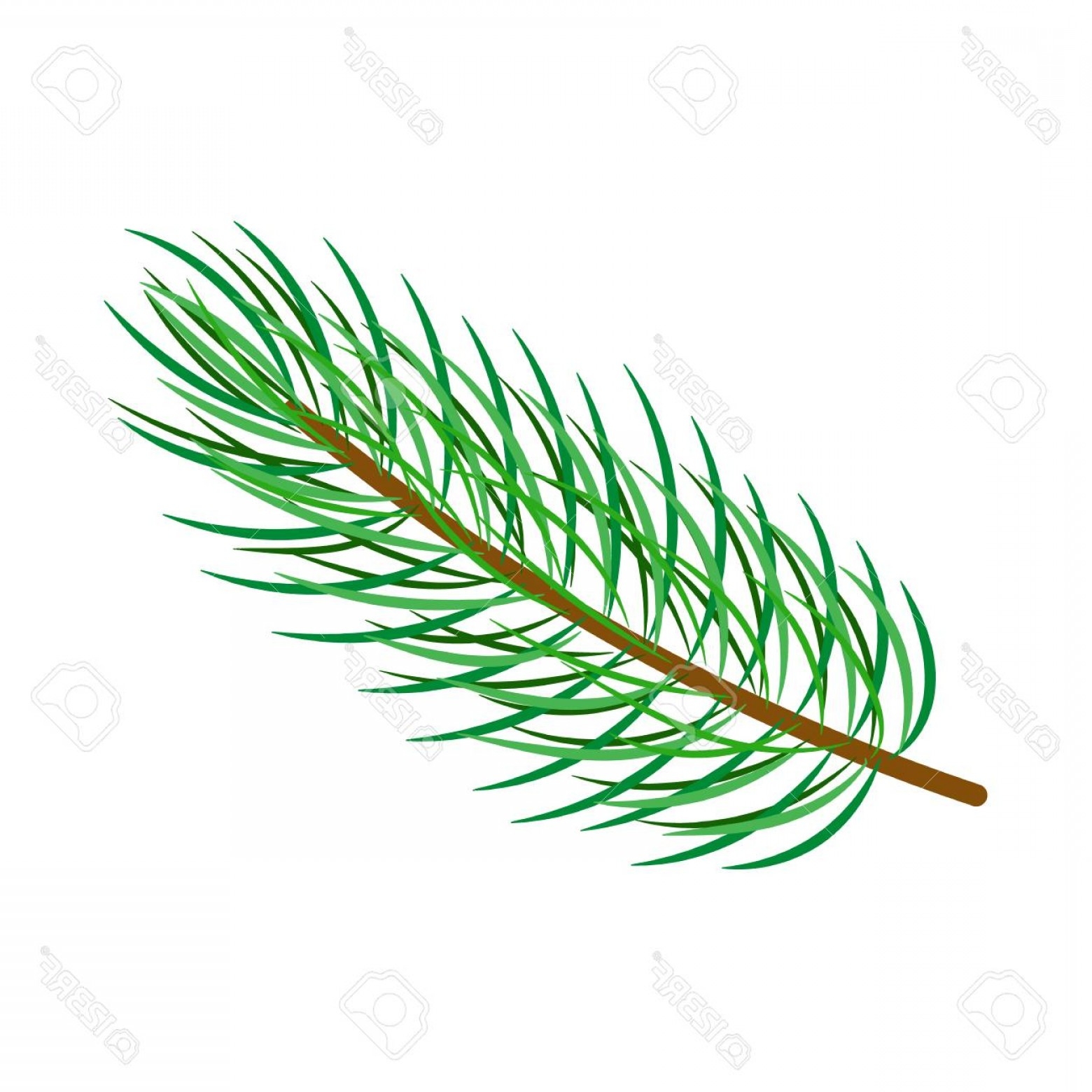 Pine Leaves Vector: Photostock Vector Vector Flat Cartoon Style Spruce Pine Fir Tree Leaves Needles On Branch Isolated Illustration On A W