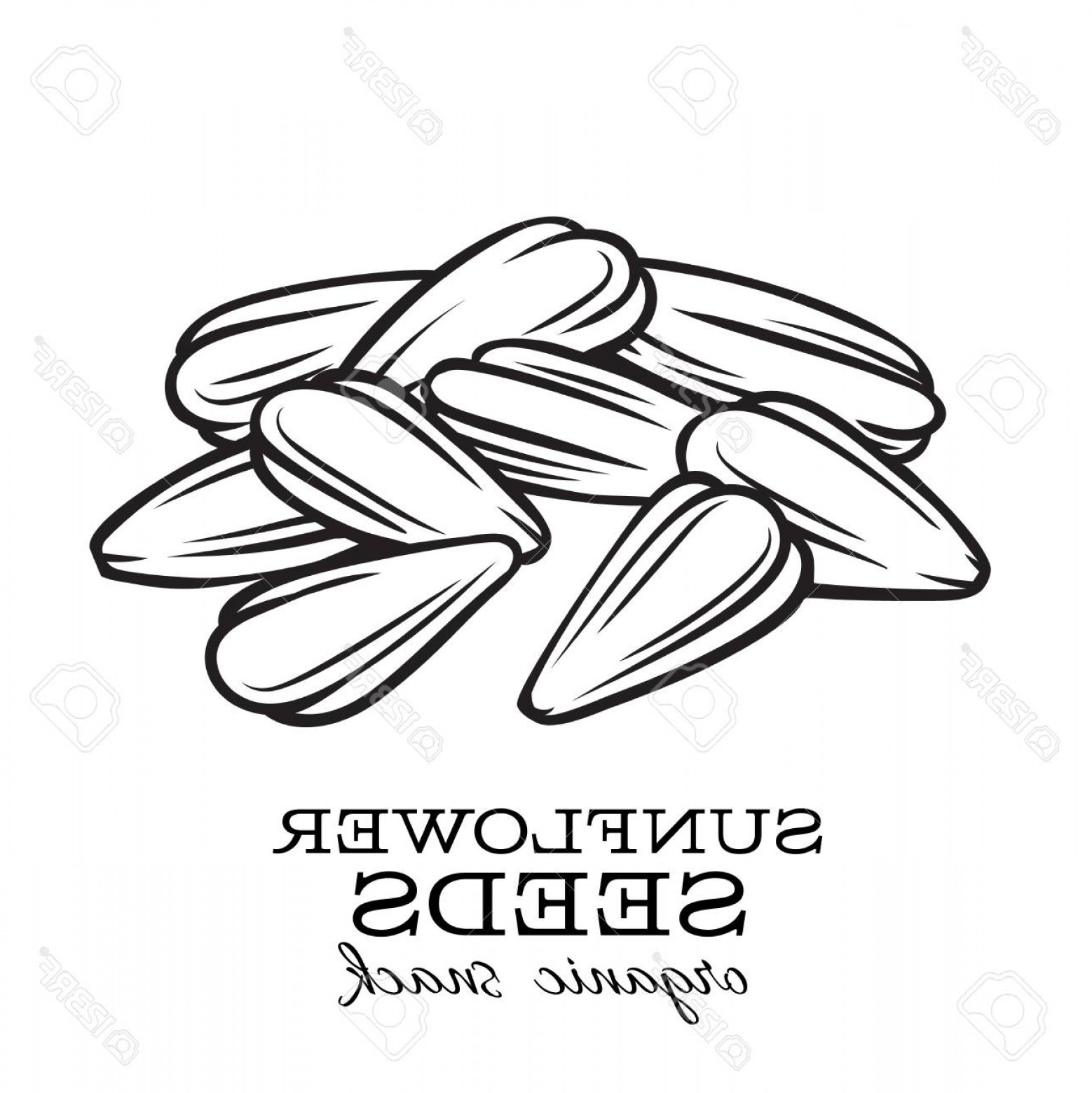 Vector Black And White Sunflower Seed: Photostock Vector Vector Hand Drawn Sunflower Seeds