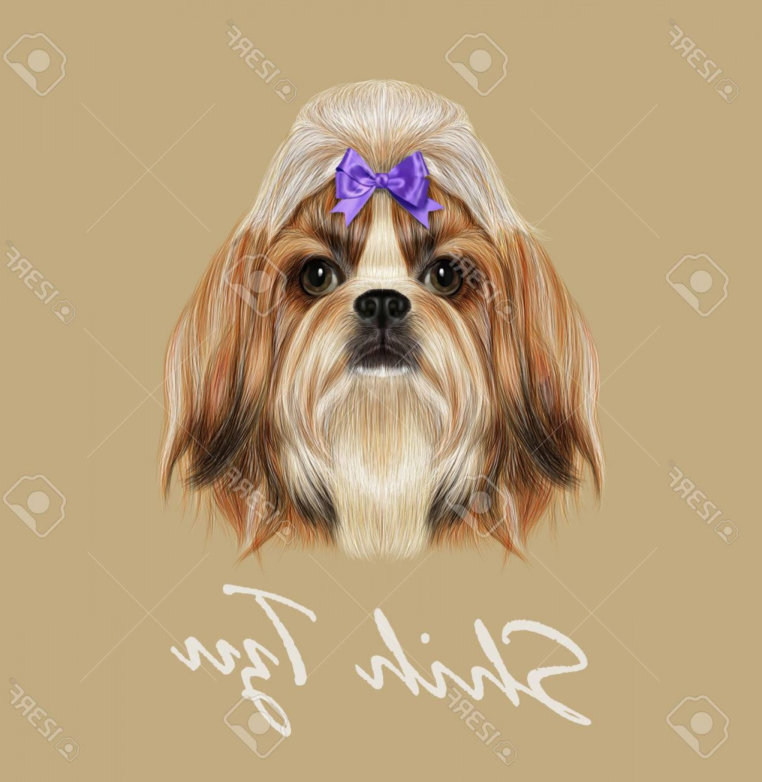 Shih Tzu Vector Siluete: Photostock Vector Vector Illustrated Portrait Of Shih Tzu Dog Domestic Toy Dog Breed Tricolor Dog With Violet Bow