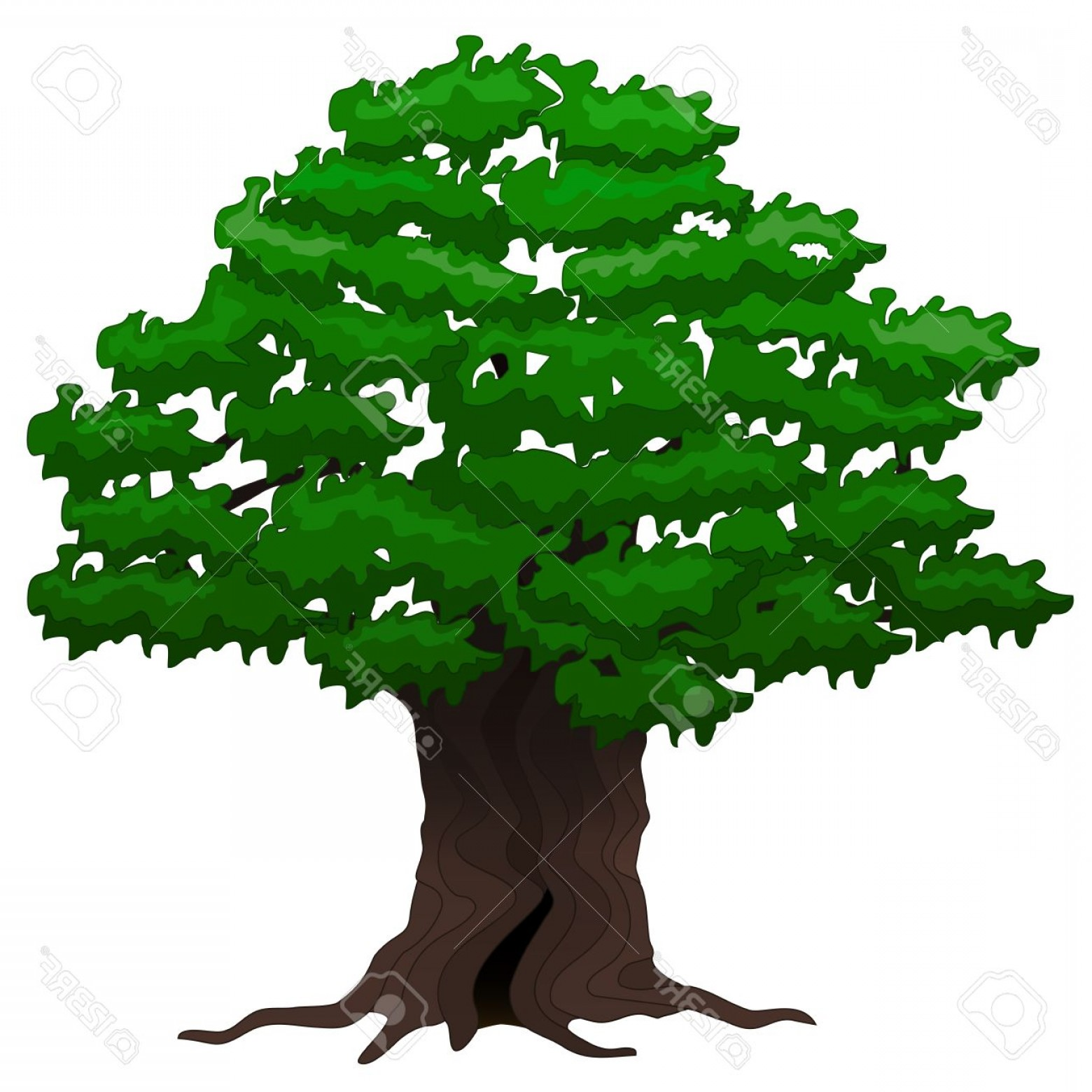 Red Oak Tree Vector: Photostock Vector Vector Illustration Big Old Oak Tree On A White Background