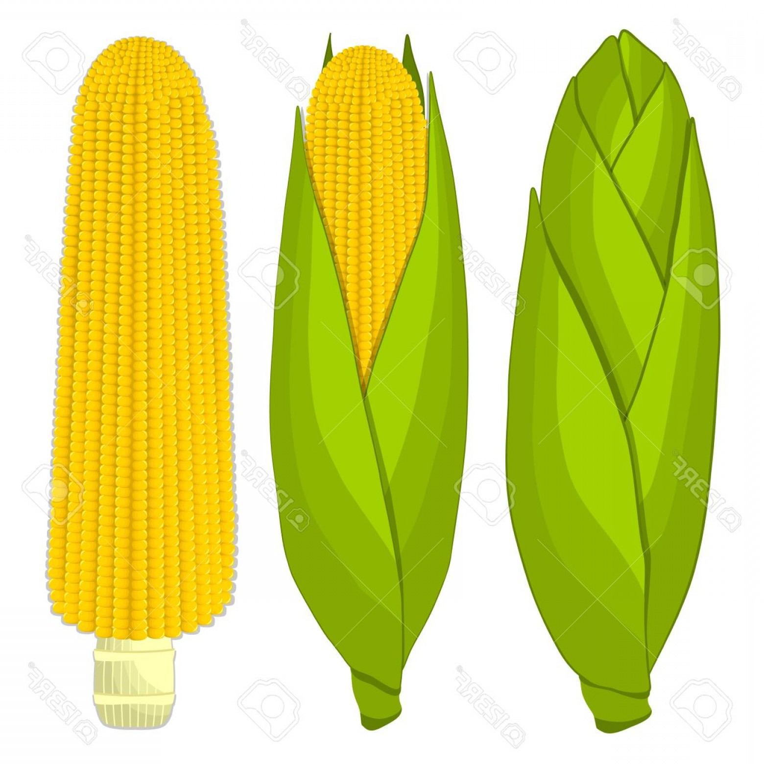 Maize Vector Tree: Photostock Vector Vector Illustration Logo For Whole Ripe Vegetable Yellow Corn With Green Stem Leaf Cut Sliced Corn D