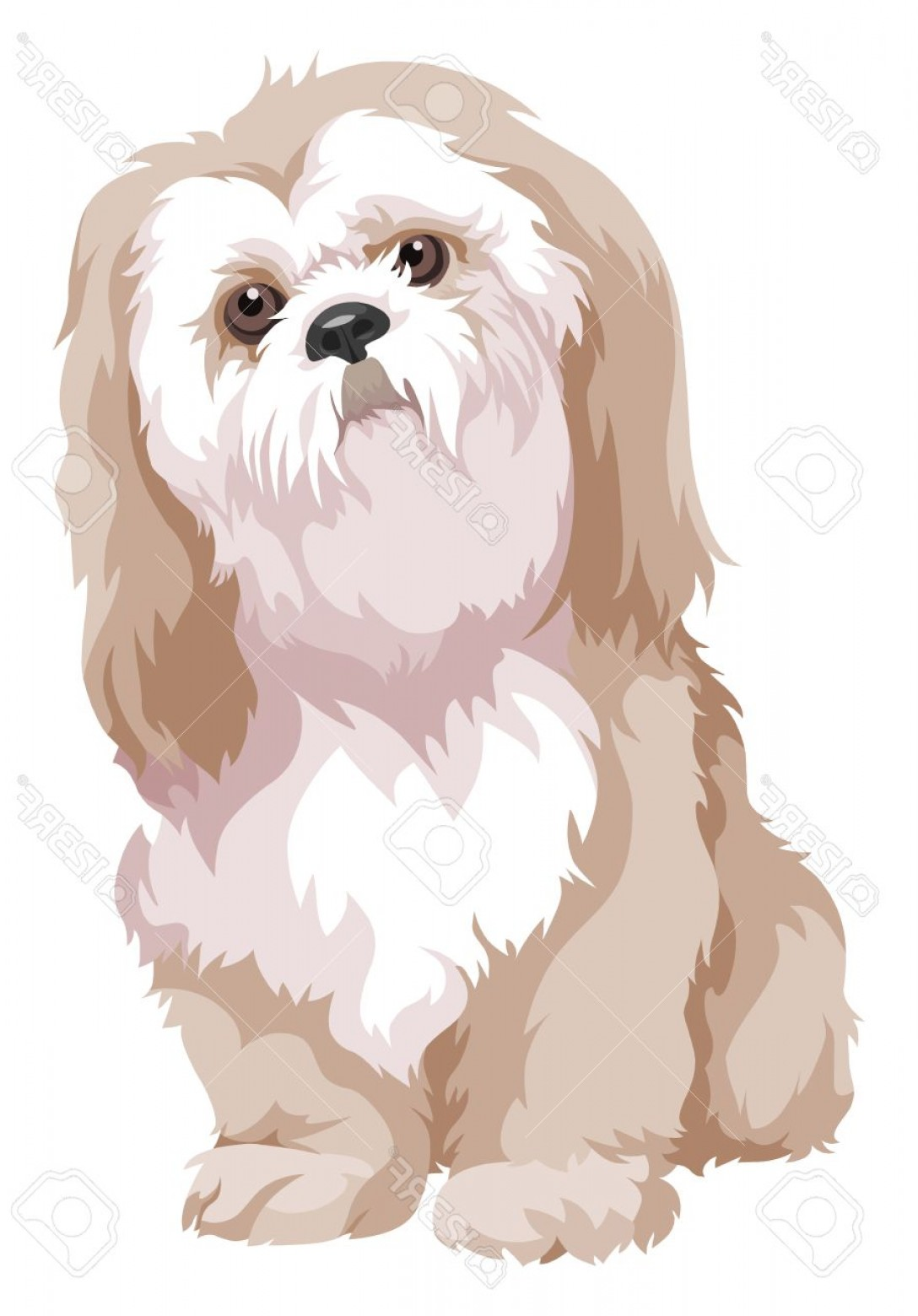 Shih Tzu Vector Siluete: Photostock Vector Vector Illustration Of Bolognese Dog