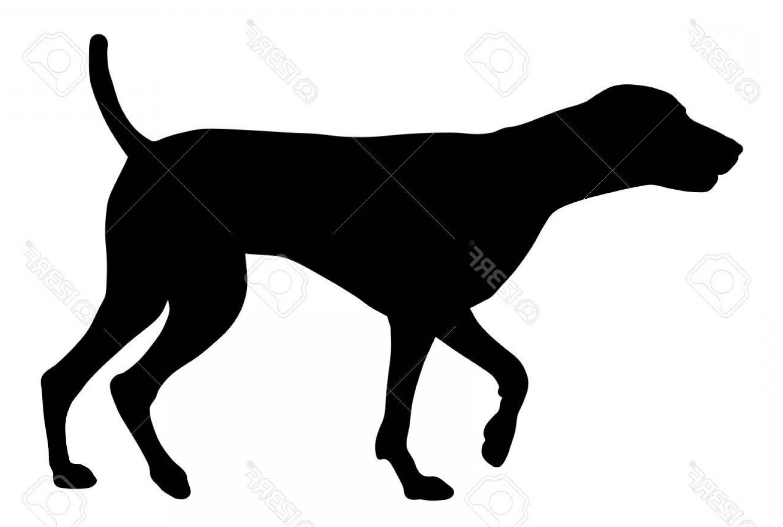 Pointer Dog Vector: Photostock Vector Vector Illustration Of German Short Hair Pointer Silhouette