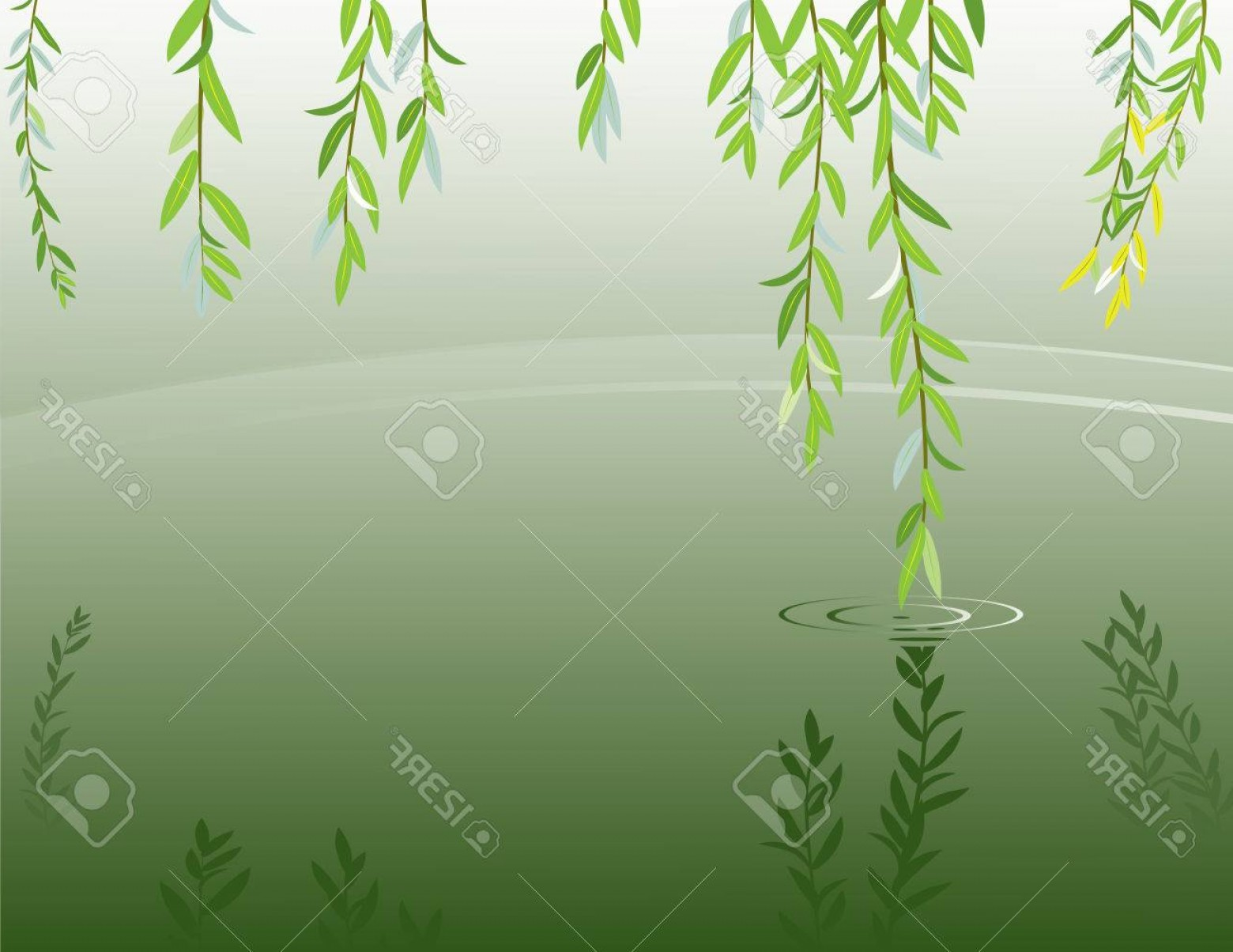 Vector Natural Willow: Photostock Vector Vector Illustration Of Willow Brancheas At Pond Surface