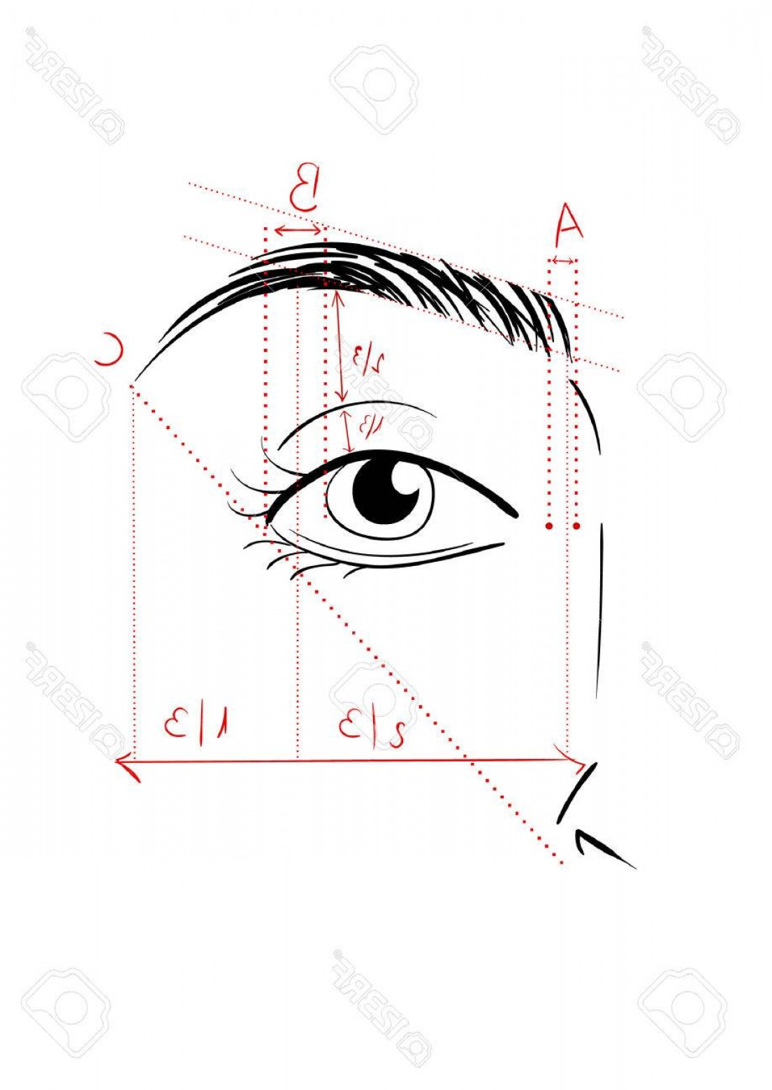 Vector Face Mapping: Photostock Vector Vector Illustration Of Woman Face And Eyebrow Mapping How To Shape It At Home Makeup Tips Perfect Br