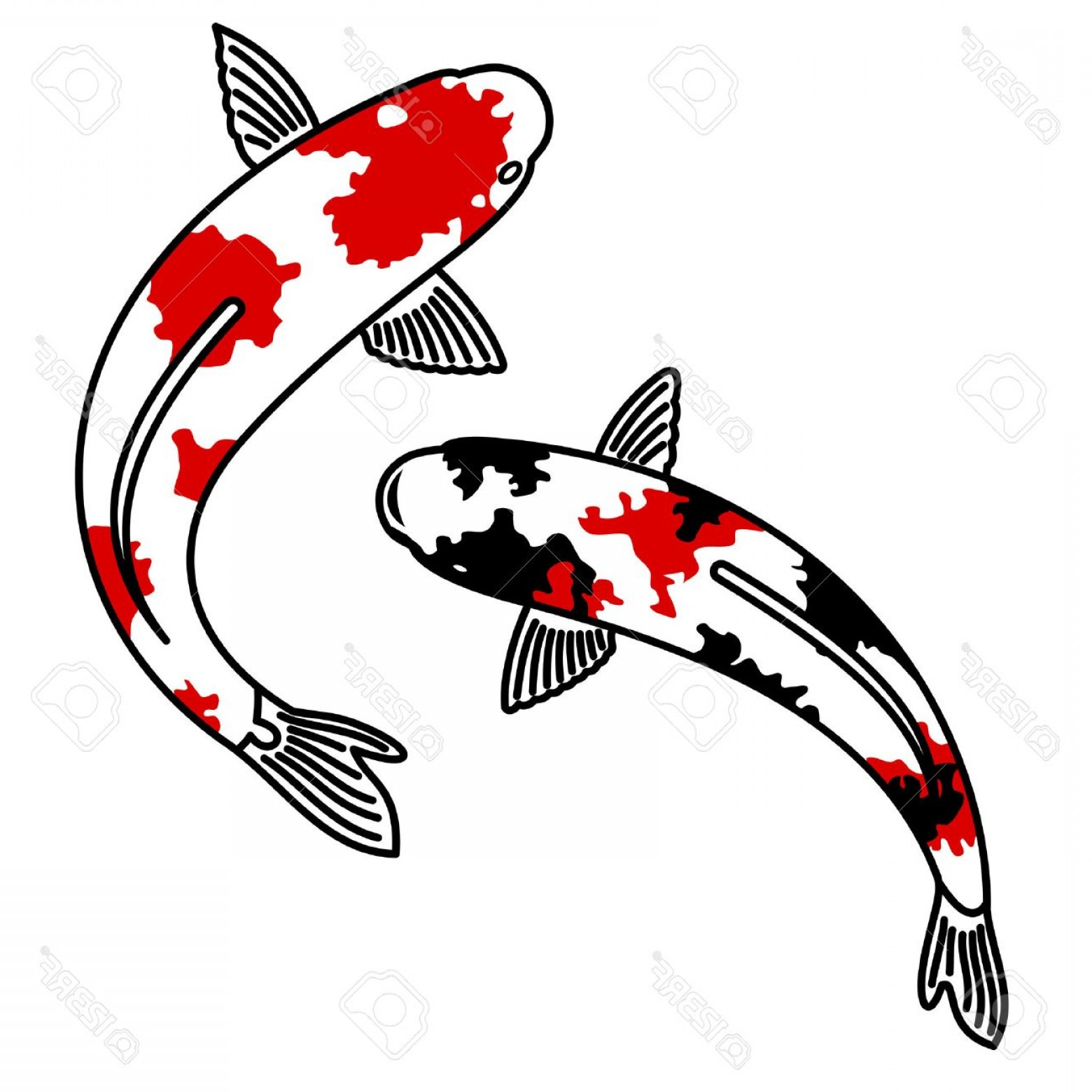 Koi Vector: Photostock Vector Vector Image Of Japanese Carp Koi