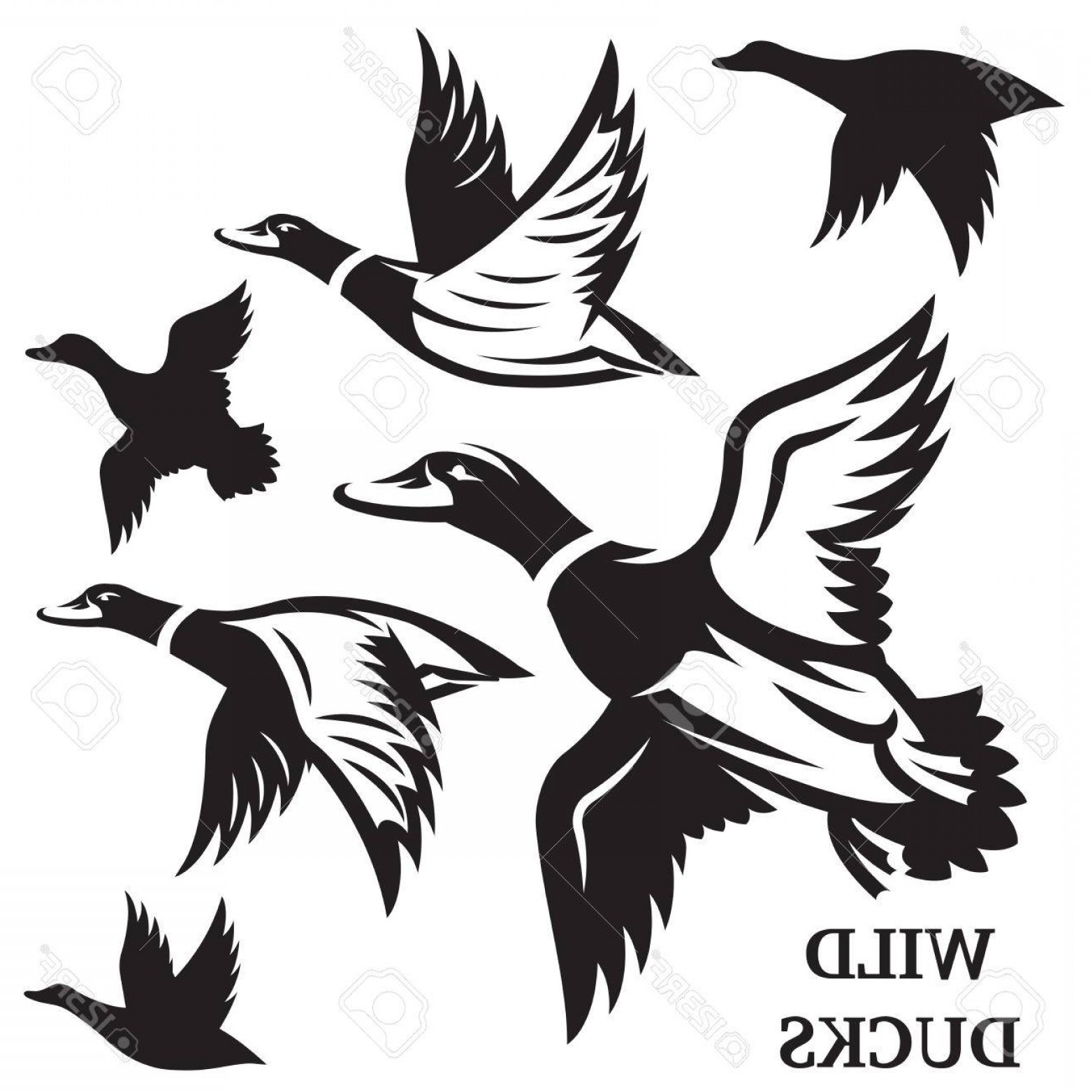 Flying Duck Outline Vector: Photostock Vector Vector Set Of Flying Wild Ducks Vector Illustration