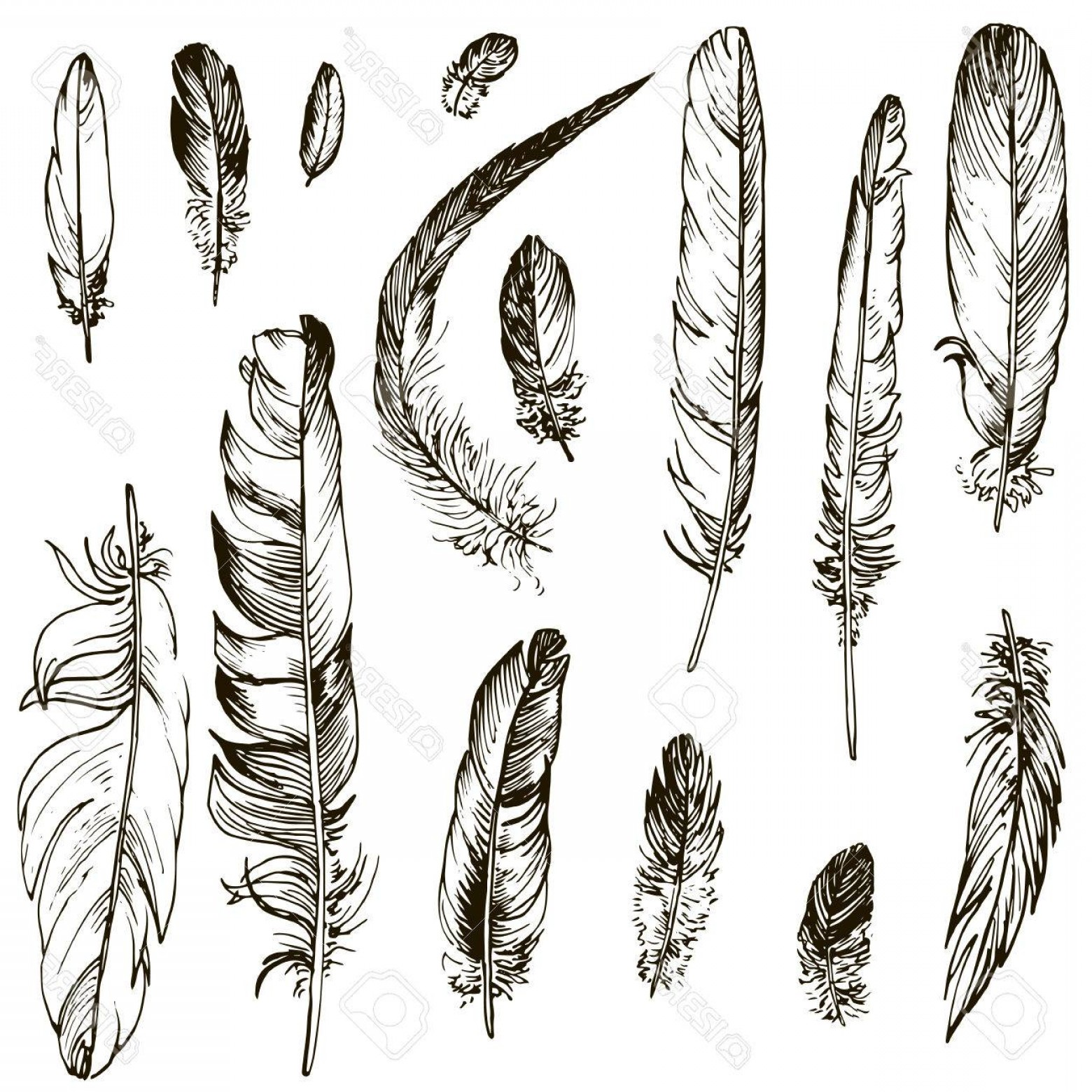 Vector Drawing Feathers: Photostock Vector Vector Set Of Ink Drawing Feathers Hand Drawn Vector Elements