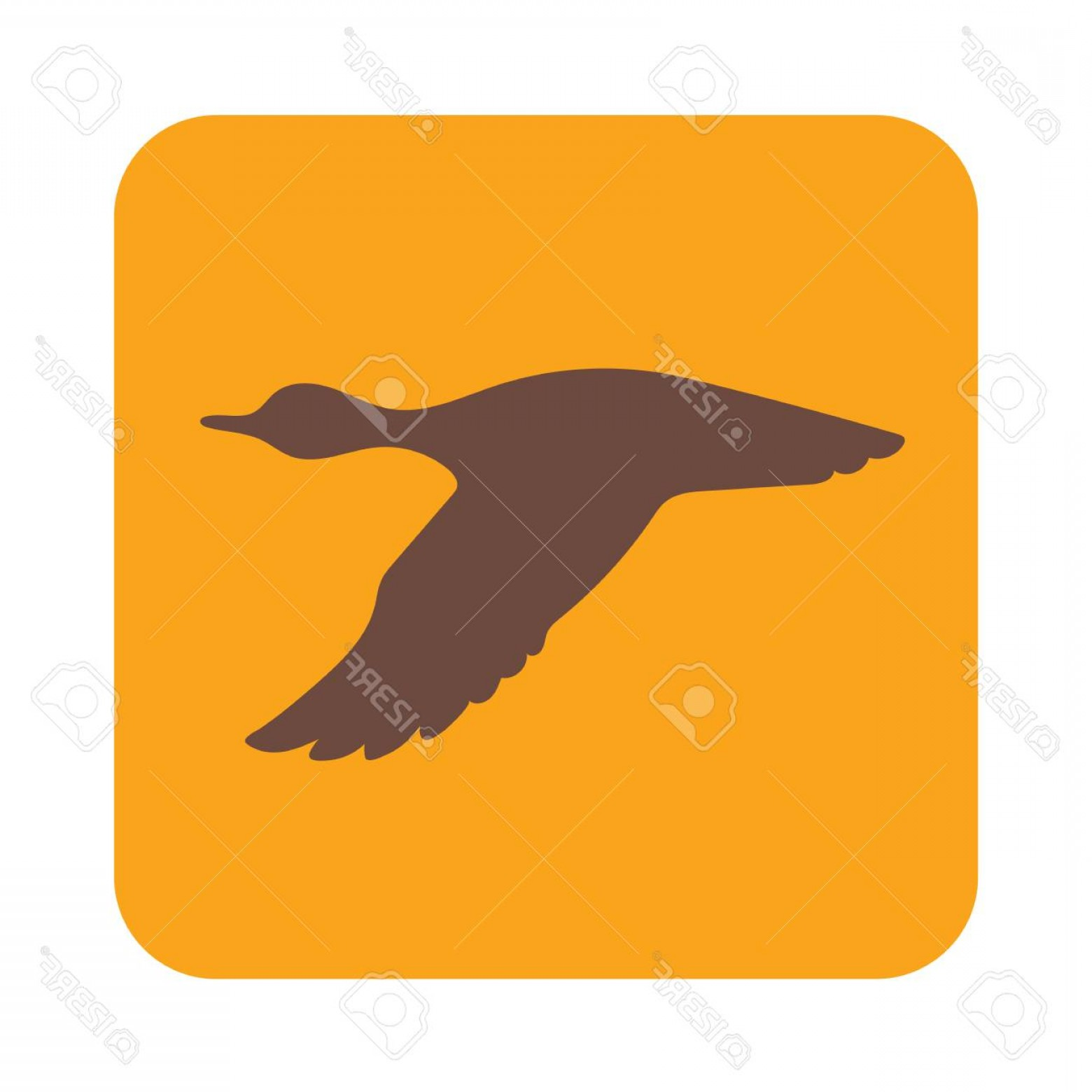 Flying Duck Outline Vector: Photostock Vector Vector Silhouette Flying Duck Vector Illustration