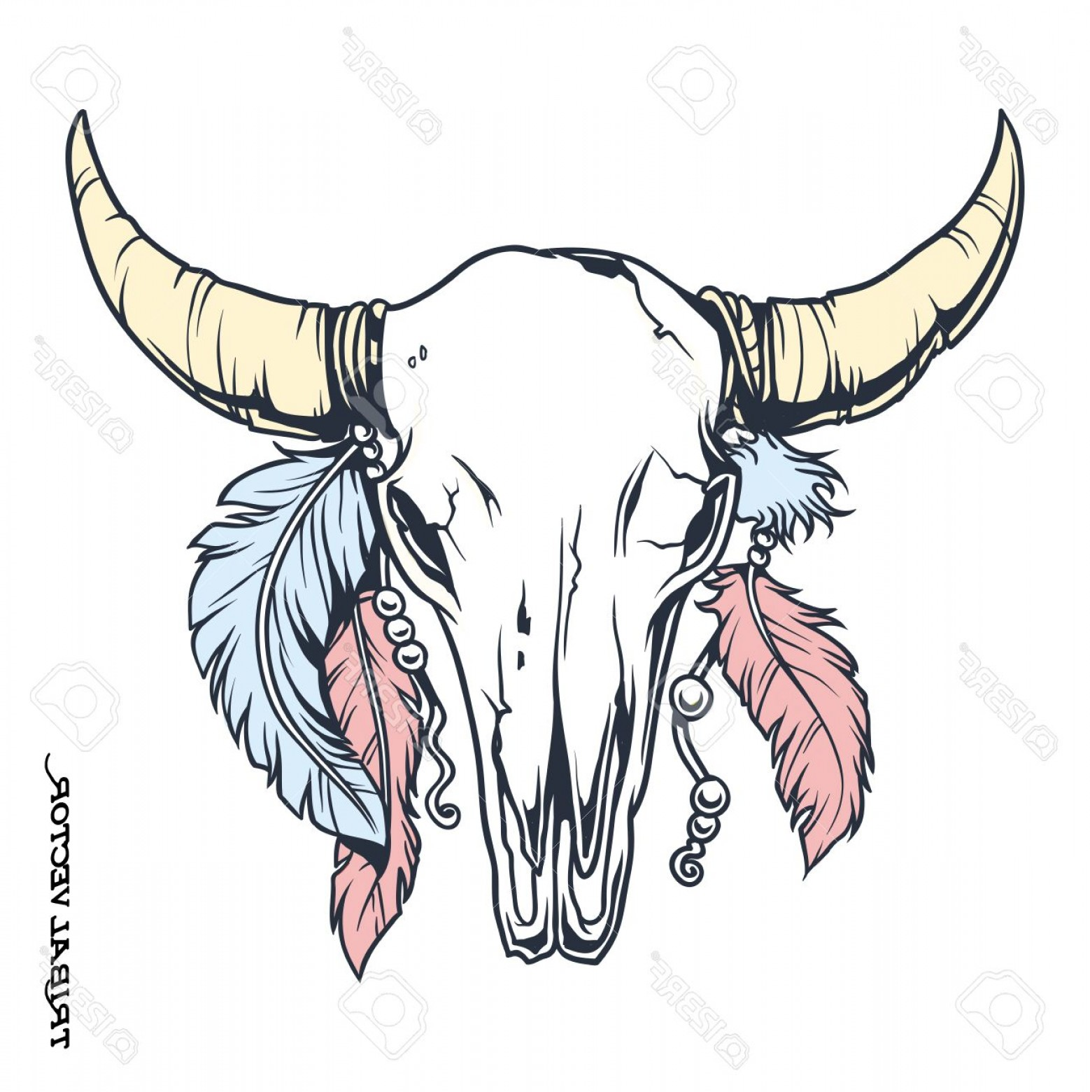 Longhorn Skull Vector: Photostock Vector Vector Tattoo Tribal Bull Skull With Feather Illustration