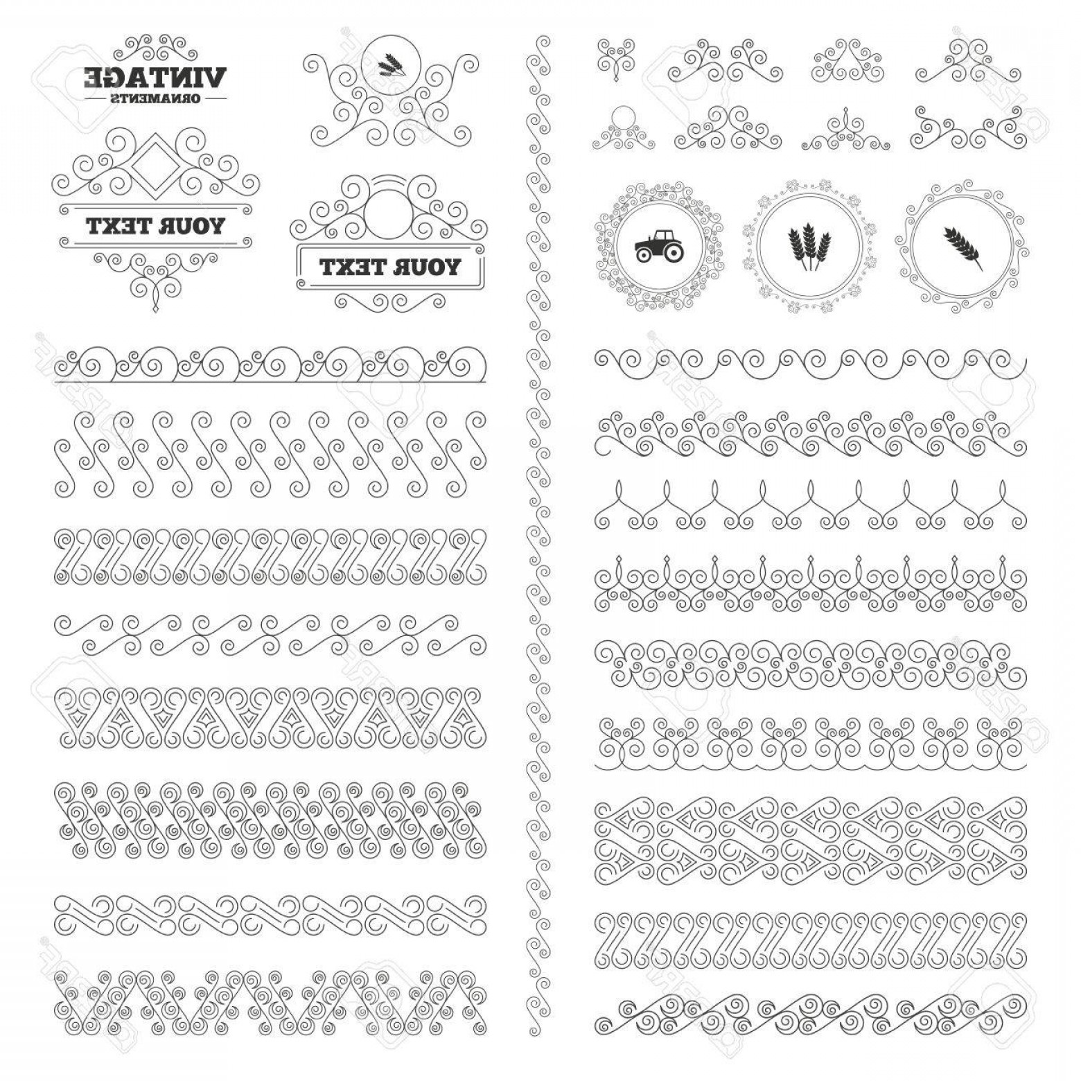 Wheat Flourishes Vector: Photostock Vector Vintage Ornaments Flourishes Calligraphic Agricultural Icons Wheat Corn Or Gluten Free Signs Symbols