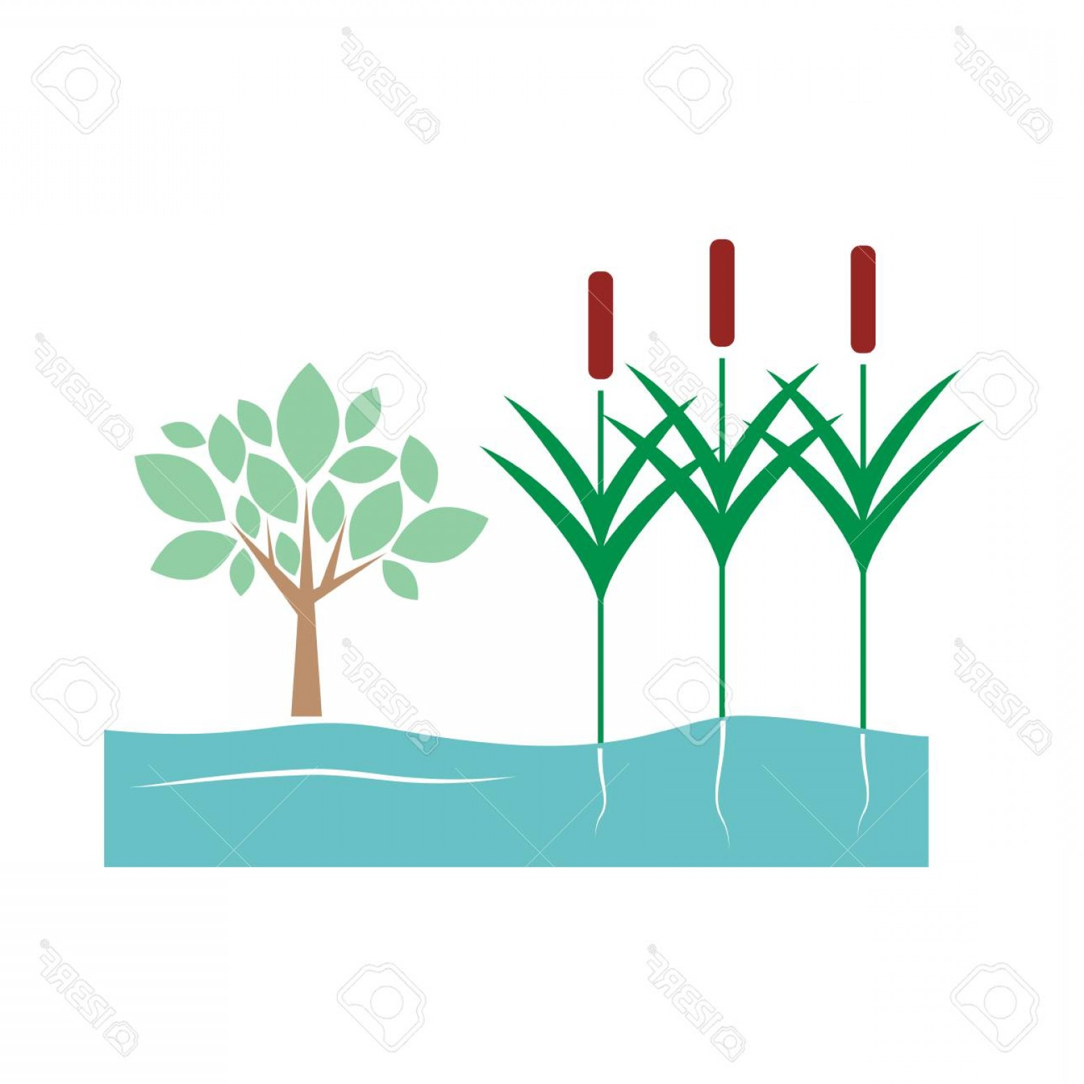 River Vector Art: Photostock Vector Water Reed Plant On Swamp Lake And River Vector Illustration