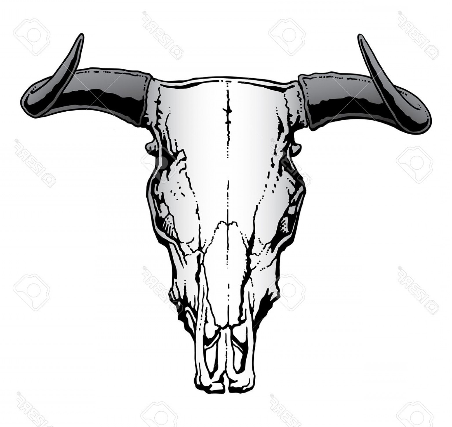 Longhorn Skull Vector: Photostock Vector Western Bull Or Steer Skull Illustration