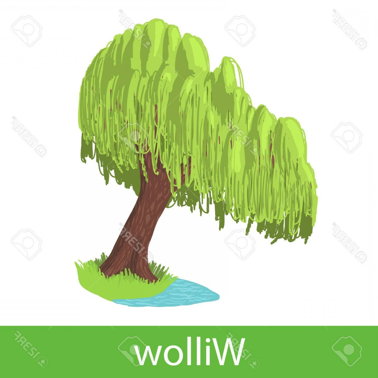 Vector Natural Willow: Photostock Vector Willow Cartoon Tree Single Illustration On A White Background