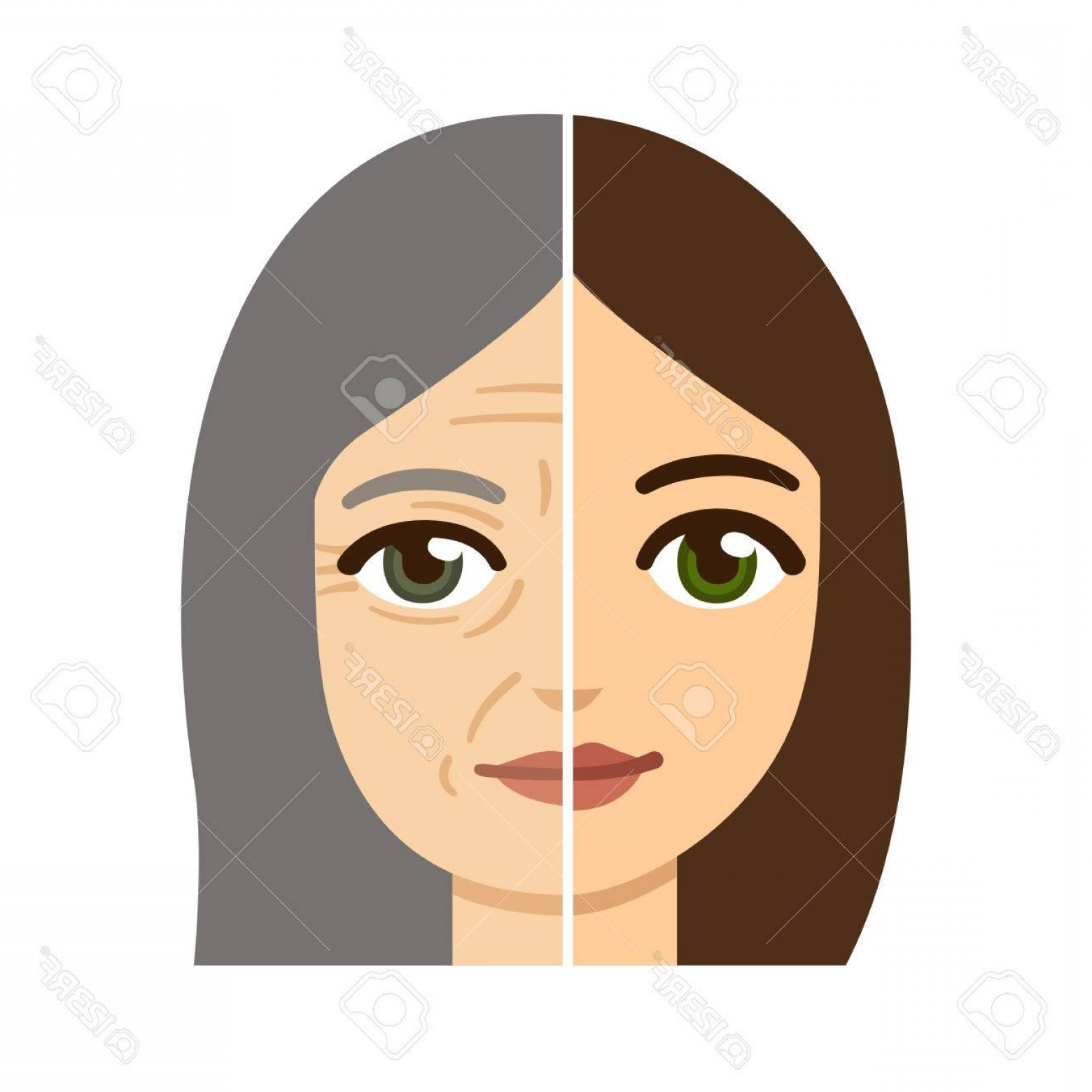 Lady Face Layers Vector: Photostock Vector Woman Facedivided In Half Young And Old With Wrinkles