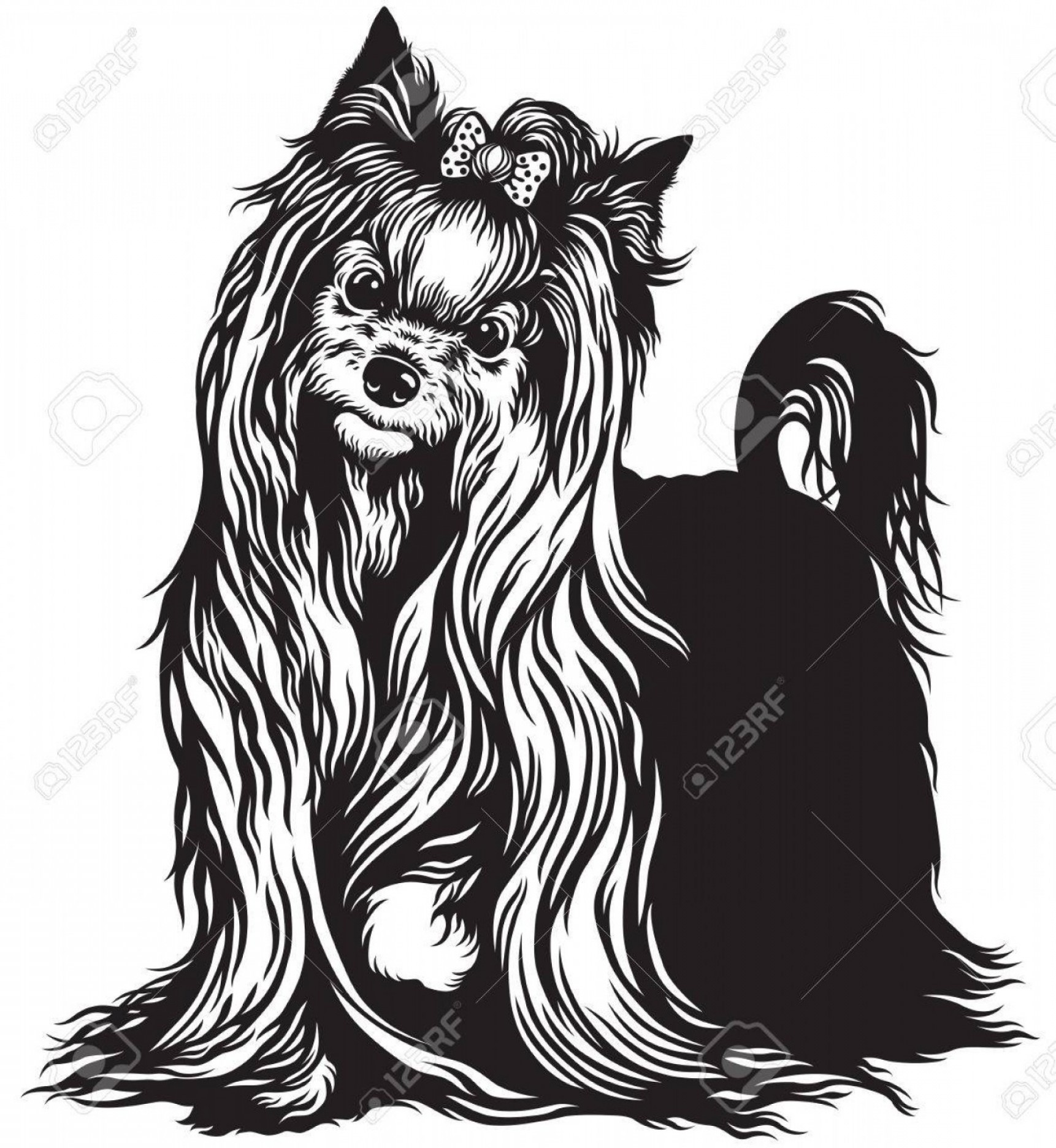 Cute Yorkie Dog Vector: Photostock Vector Yorkshire Terrier Dog Black And White Image