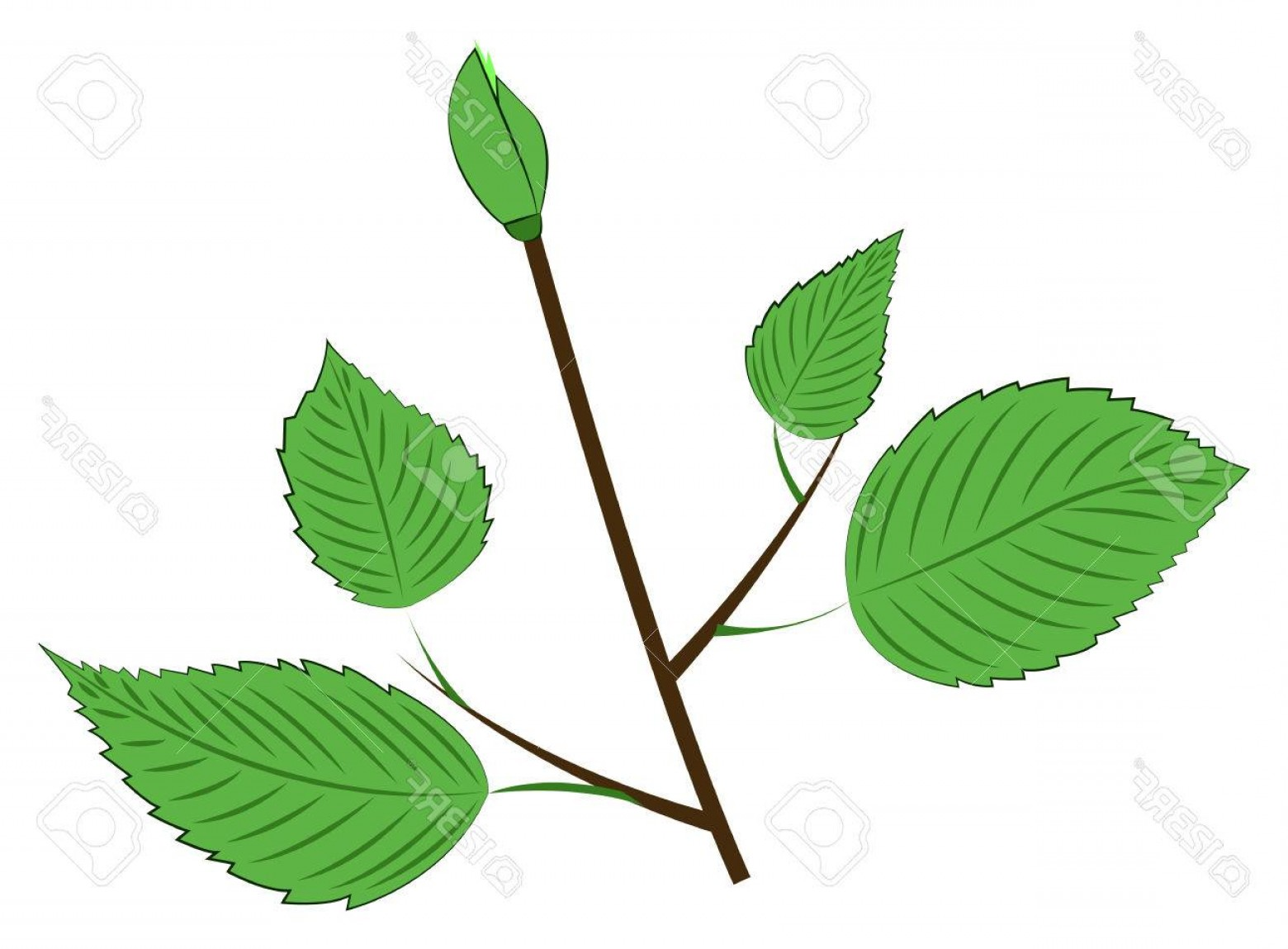 Bud Vector: Photostock Vector Young Branch With Leaves And Bud Vector Illustration