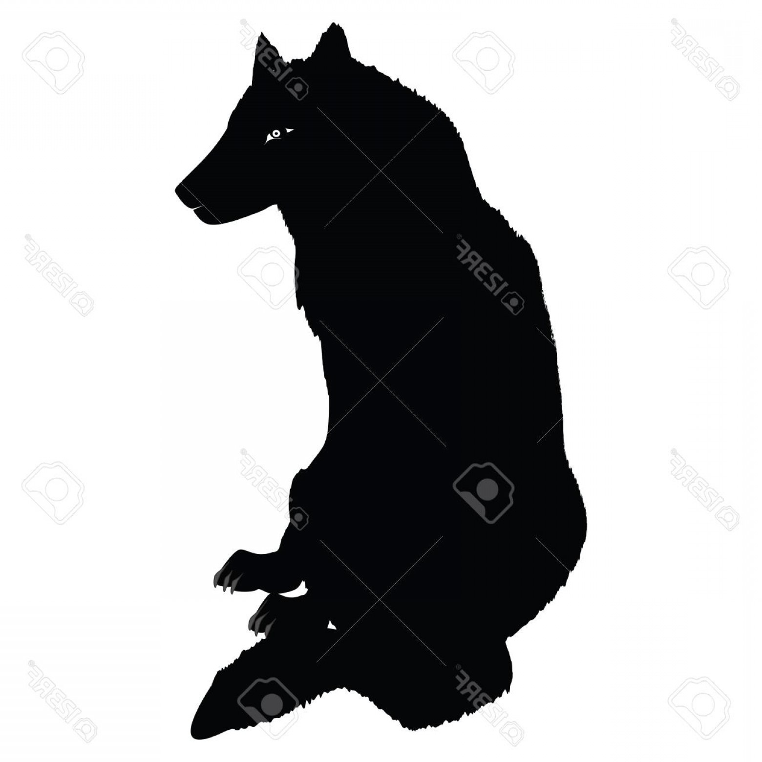 Calm Wolf Vector: Photostock Vector Young Wolf Sitting Sitting In Profile Isolated On White Background Art Creative Vector