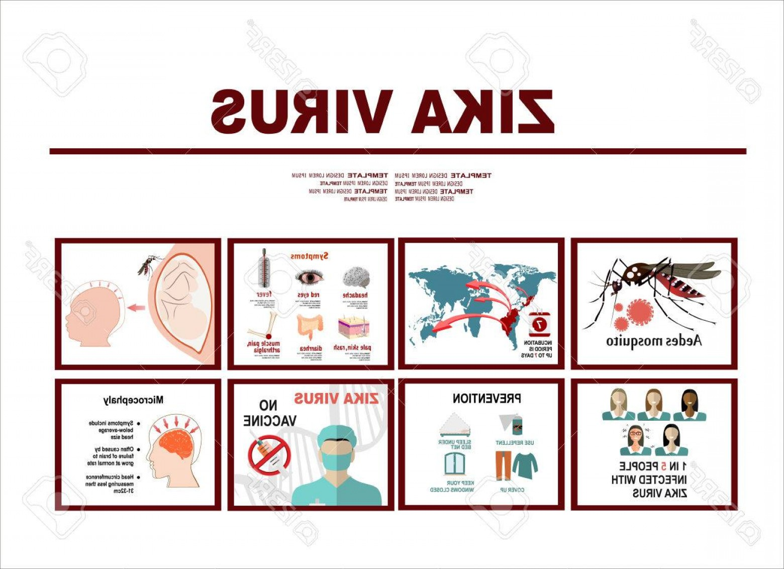 Vector -Borne Transmission Of Disease: Photostock Vector Zika Virus Infographic Elements Prevention Transmission Vaccine Symptoms Microcephaly Protection Mea
