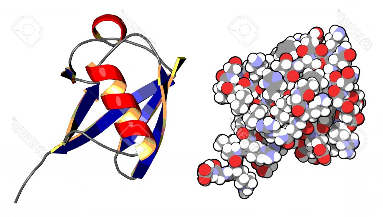 Vector Protein: Photoubiquitin Protein Molecule Chemical Structure Ubiquitin Is A Molecular Tag That Indicates Proteins M