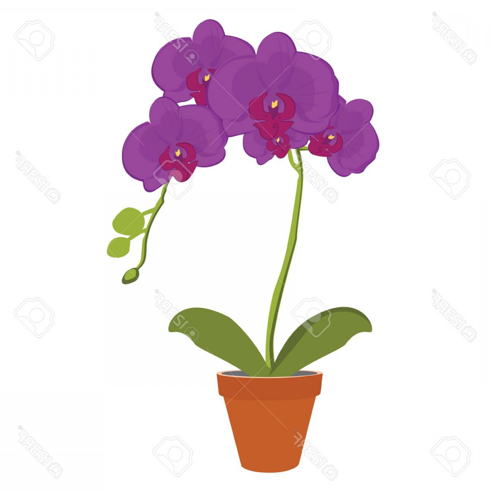 Purple Orchid Vector: Photovector Illustration Exotic Purple Orchid Flower In A Pot Phalaenopsis Orchid Blooming In A Pot