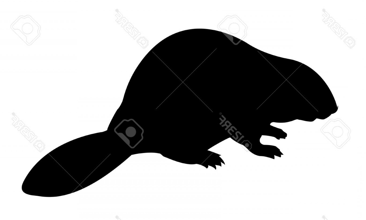 Vector Silhouette Beaver: Photovector Silhouette Beaver On White Background