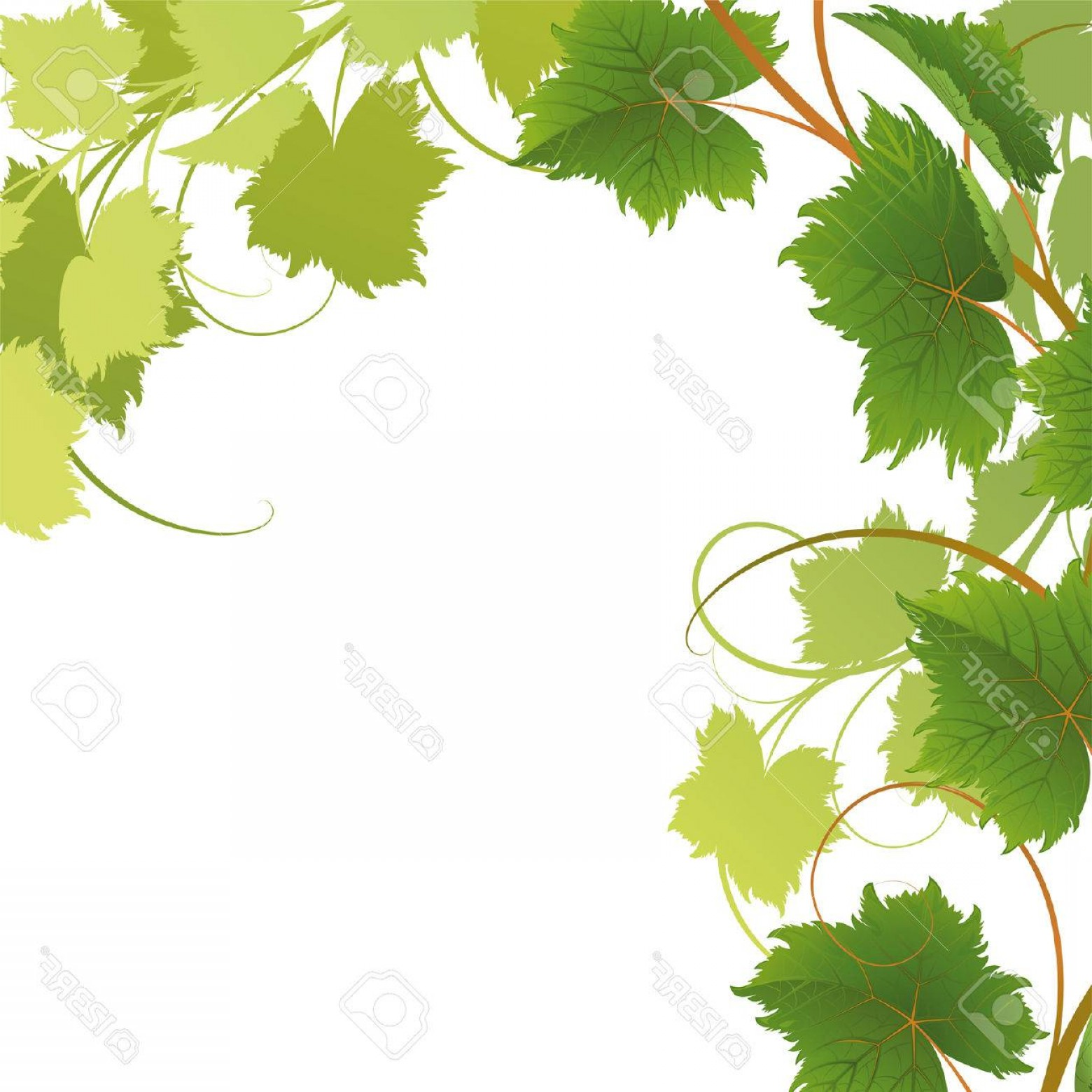 Vector Vine Tree: Photovine On A White Background Mask