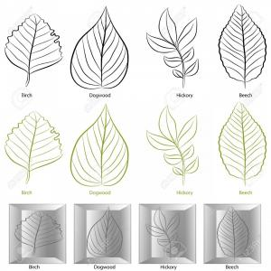 Dogwood Tree Vector: Photoan Image Of A Set Of Birch Dogwood Hickory And Birch Tree Leaf Types