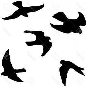 Falcon Silhouette Vector: Black And White Eagle Falcon Or Hawk Flying