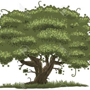 Red Oak Tree Vector: Silhouette Of Oak Tree With Leaves Vector