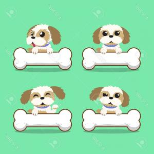 Shih Tzu Clipart-Vector: Long Haired Shih Tzu Dog Lying Down And Looking At The Viewer On A White Background