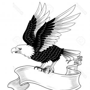 Eagle Banner Vector: American Eagle With Banner Illustratio Vector