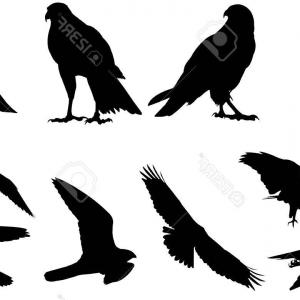 Falcon Silhouette Vector: Falcon Bird Black Silhouette Animal Vector