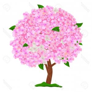Vector Blooming Tree: Photostock Vector Flowering Pink Tree Isolated On White Background Spring Blooming Tree With Flowers Apple Tree Cherry