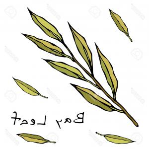 Green Bay Vector: Photostock Vector Fresh Green Bay Leaves Aromatic Herb Doodle Style Icon