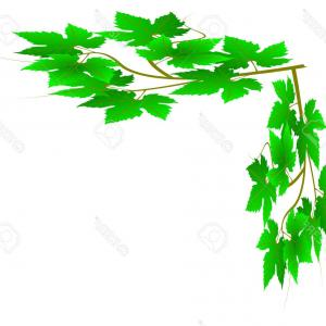 Green Vine Vector: Green Vine Leaves In A Heart Shape Vector
