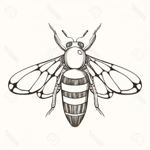 Bee Drawing Vector: Flying Bee On White Background Iconbee