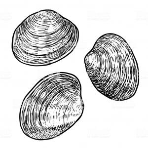 Clam Vector: Photostock Vector Hand Drawn Vector Illustration Of Clam As Seafood Shellfish With Lemon And Herbs Black Isolated On W